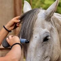 Alimentation et soins du cheval